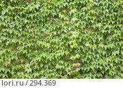 Купить «Фон горизонтальный. Зеленые листья», эксклюзивное фото № 294369, снято 26 апреля 2008 г. (c) Татьяна Лата / Фотобанк Лори