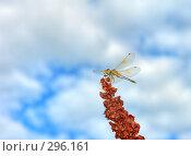 Купить «Стрекоза», фото № 296161, снято 20 апреля 2018 г. (c) Александр Тараканов / Фотобанк Лори