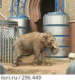 Купить «Азиатский слон», фото № 296449, снято 2 мая 2008 г. (c) Юлия Смольская / Фотобанк Лори