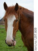 Купить «Портрет красивого коня», фото № 297809, снято 18 мая 2008 г. (c) Oksana Mahrova / Фотобанк Лори
