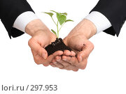 Купить «Руки и росток», фото № 297953, снято 30 апреля 2008 г. (c) Dzianis Miraniuk / Фотобанк Лори