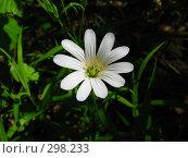 Купить «Лесная красавица», фото № 298233, снято 12 мая 2008 г. (c) Михаил Ковалев / Фотобанк Лори