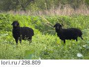 Купить «Овца с ягненком», фото № 298809, снято 2 мая 2008 г. (c) Артем Ефимов / Фотобанк Лори