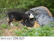 Купить «Еды!!», фото № 298821, снято 2 мая 2008 г. (c) Артем Ефимов / Фотобанк Лори