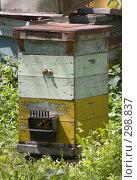 Купить «Пчелиный улей», фото № 298837, снято 3 мая 2008 г. (c) Артем Ефимов / Фотобанк Лори