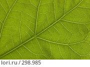Купить «Зеленый лист», фото № 298985, снято 10 февраля 2008 г. (c) Андрей Чмелёв / Фотобанк Лори