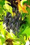 Абстрактное изображение в желто зеленых тонах, фото № 299693, снято 6 октября 2007 г. (c) Андрей Бурдюков / Фотобанк Лори