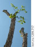 Купить «Весна», фото № 299717, снято 22 мая 2008 г. (c) Талдыкин Юрий / Фотобанк Лори
