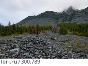 Купить «Лес на Алтайском склоне», фото № 300789, снято 24 апреля 2018 г. (c) Андрей Пашкевич / Фотобанк Лори