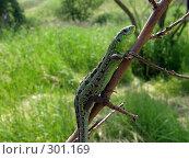 Ветка с ящерицей на фоне травы. Стоковое фото, фотограф Фиронов Максим / Фотобанк Лори