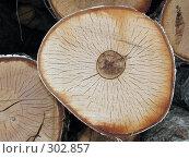 Купить «Спил бревна берёзы», фото № 302857, снято 27 апреля 2008 г. (c) Иван / Фотобанк Лори