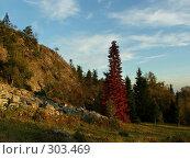 Купить «Осень на отрогах Уральских гор», фото № 303469, снято 13 сентября 2007 г. (c) Sergey Toronto / Фотобанк Лори