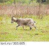 Купить «Бегущий козел», фото № 303605, снято 2 мая 2008 г. (c) Эдуард Межерицкий / Фотобанк Лори