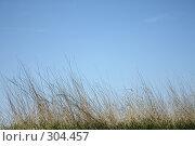 Купить «Трава на фоне синего неба», фото № 304457, снято 24 мая 2008 г. (c) Алексей Ефимов / Фотобанк Лори