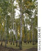 Купить «Осенняя береза», фото № 304461, снято 30 сентября 2007 г. (c) Ирина Стюфеева / Фотобанк Лори