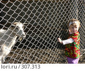 Девочка с козой (2008 год). Редакционное фото, фотограф Алла Максимчук / Фотобанк Лори