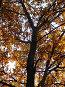 Дерево в осеннем убранстве, фото № 307401, снято 27 октября 2007 г. (c) Sergey Toronto / Фотобанк Лори