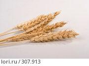 Купить «Спелые колосья пшеницы», фото № 307913, снято 10 января 2008 г. (c) Harry / Фотобанк Лори