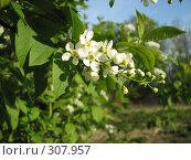 Купить «Перевоплощение яблони», фото № 307957, снято 3 мая 2008 г. (c) Эдуард Кольга / Фотобанк Лори