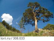 Купить «Летний пейзаж», фото № 308033, снято 19 мая 2008 г. (c) Юрий Пономарёв / Фотобанк Лори