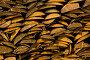 Русская поленница. Фоновое изображение., фото № 308337, снято 18 апреля 2008 г. (c) Harry / Фотобанк Лори