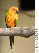 Купить «Попугай Солнечная аратинга (Aratinga solstitialis)», фото № 308581, снято 17 мая 2008 г. (c) Владимир Воякин / Фотобанк Лори