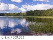 Купить «Заросшее озеро. Яркий летний пейзаж. Белые облака», фото № 309353, снято 21 июля 2007 г. (c) Катыкин Сергей / Фотобанк Лори