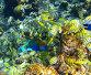 Большая стая рыб, фото № 309641, снято 21 августа 2017 г. (c) Михаил / Фотобанк Лори