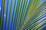 Лист пальмового дерева на фоне голубого неба, фото № 309657, снято 22 июля 2017 г. (c) Михаил / Фотобанк Лори
