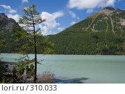 Зелёное озеро, зелёный берег, зелёное дерево. Стоковое фото, фотограф Андрей Пашкевич / Фотобанк Лори