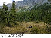 Купить «Лес в горах», фото № 310057, снято 14 ноября 2018 г. (c) Андрей Пашкевич / Фотобанк Лори