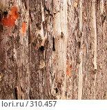 Фрагмент древесной коры, фото № 310457, снято 9 февраля 2008 г. (c) NM / Фотобанк Лори