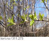 Купить «Весна», фото № 311273, снято 27 апреля 2008 г. (c) Бяков Вячеслав / Фотобанк Лори