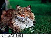 Купить «Чеширский кот», эксклюзивное фото № 311881, снято 2 мая 2008 г. (c) Николай Винокуров / Фотобанк Лори