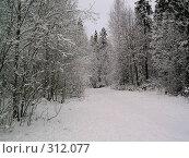 Заснеженный Карельский лес. Стоковое фото, фотограф Сергей Карцов / Фотобанк Лори