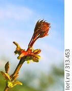 Купить «Весеннее пробуждение», фото № 313453, снято 3 мая 2008 г. (c) Анатолий Теребенин / Фотобанк Лори