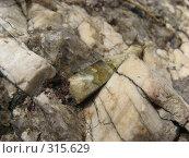 Купить «Кристалл берилла на полевом шпате», фото № 315629, снято 7 июня 2008 г. (c) Сергей Ильков / Фотобанк Лори