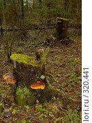 Пень в темном лесу, резкий только передний план. Стоковое фото, фотограф Александр Иванов / Фотобанк Лори