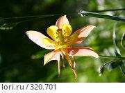 Купить «Летний цветок», фото № 320701, снято 12 июня 2008 г. (c) Баскаков Андрей / Фотобанк Лори