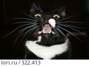 Черная кошка. Стоковое фото, фотограф Константин Голубкин / Фотобанк Лори
