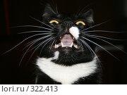 Купить «Черная кошка», фото № 322413, снято 14 апреля 2008 г. (c) Константин Голубкин / Фотобанк Лори