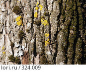 Кора осины. Стоковое фото, фотограф VPutnik / Фотобанк Лори