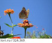 Купить «Бабочка на цветке», фото № 324369, снято 13 сентября 2007 г. (c) Кристина Викулова / Фотобанк Лори