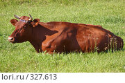 Купить «Корова лежащая на траве», фото № 327613, снято 6 июня 2008 г. (c) Олег Хархан / Фотобанк Лори