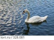 Купить «Белый лебедь», эксклюзивное фото № 328081, снято 18 июня 2008 г. (c) Наталья Волкова / Фотобанк Лори