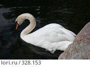 Лебедь на пруду. Стоковое фото, фотограф Галина Б / Фотобанк Лори