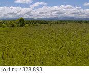 Купить «Дальневосточные поля», фото № 328893, снято 13 июня 2008 г. (c) Олег Рубик / Фотобанк Лори