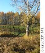 Дерево у реки. Стоковое фото, фотограф Дружинин Александр / Фотобанк Лори