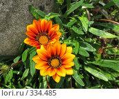 Купить «Яркие цветы. Гацания», фото № 334485, снято 11 июня 2008 г. (c) Юлия Подгорная / Фотобанк Лори