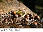 Лесные орешки. Стоковое фото, фотограф Баскаков Андрей / Фотобанк Лори